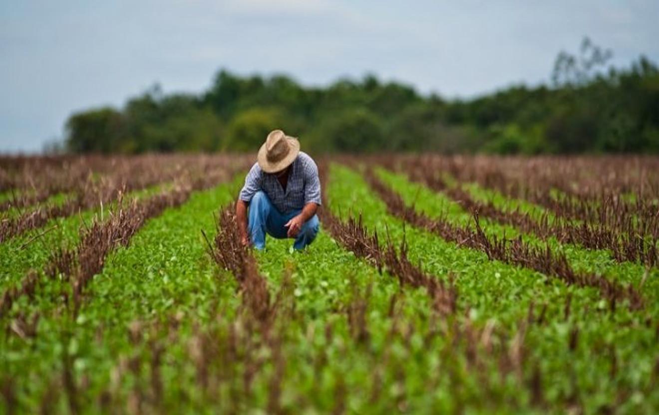Aprueban Bs. 228 millones para ejecutar Plan Siembra Cultiva 2019